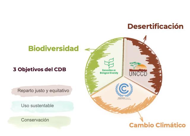 Entra en vigor el convenio obre la diversidad biologica de las naciones unidas