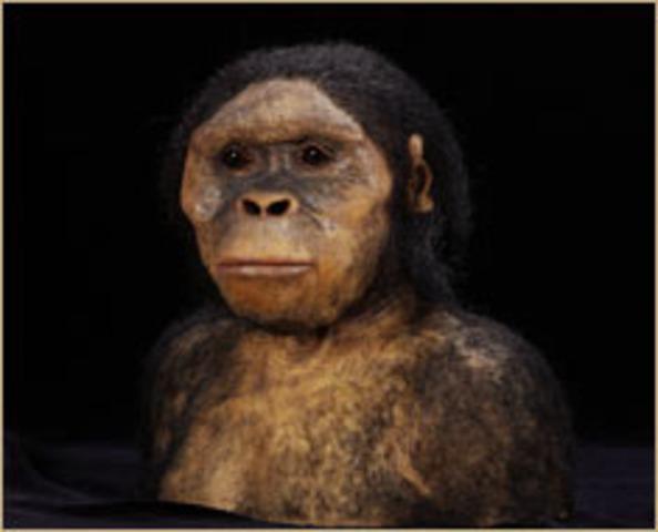 Australopithecus afarensis  - 4million to 3 million years ago