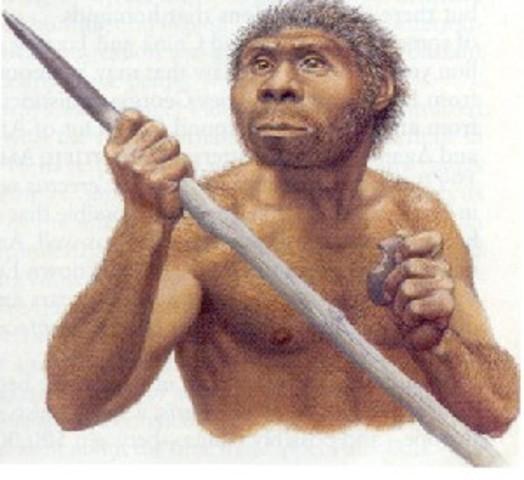 Homo erectus - 1.8 million to 200,000 B.C.E.