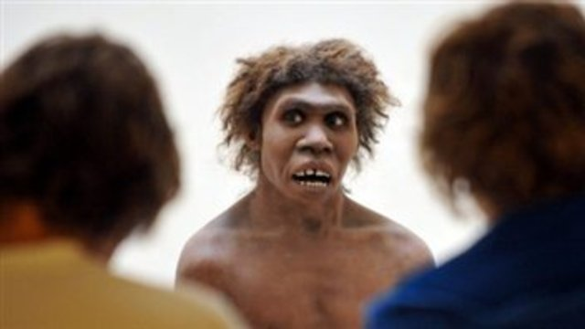 Homo sapiens Neandertaliens