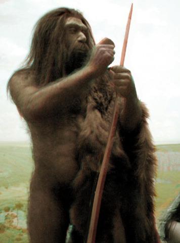 Homo sapiens neaderathalensis - 230,000-30,000 B.C.E