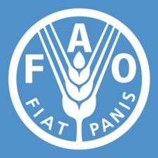Creación de la FAO y la ONU