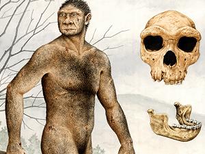 Homo heldelbergensis.