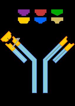 Anticuerpos
