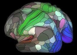 Neuropsicología dinámica.