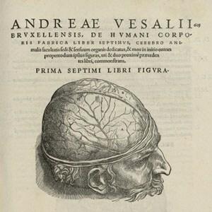Obra los siete libros sobre la estructura del cuerpo humano.