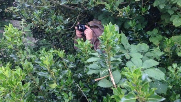 Hiding in the bush