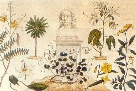 Expediciones botánicas y científicas.