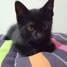 Vaig adoptar a la meva gata Suki
