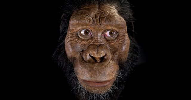 Australopithecus al Paleolític
