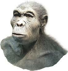 Homo habilis al Paleolític