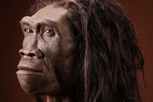 Homo erectus al Paleolític