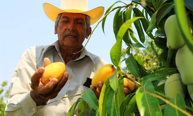 Creación de Comité Nacional de Agricultores