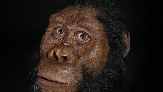 Els Australopitecos.