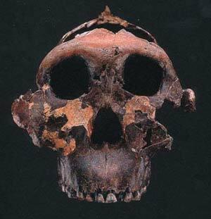 Mes sobre els Australopitecos.