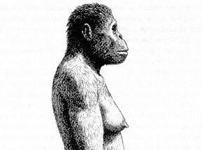 El Paleolític: Australopithecus Afarensis