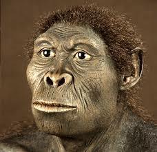 Característiques del Homo Habilis.