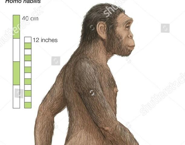 El Paleolític: Homo Habilis