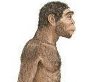 El Paleolític: Homo Erectus