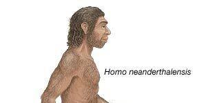 El Paleolític: Homo Neanderthalensis