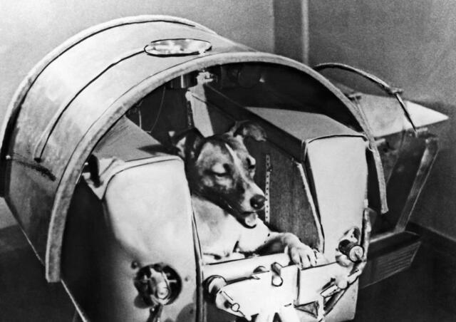 Primer animal en órbita