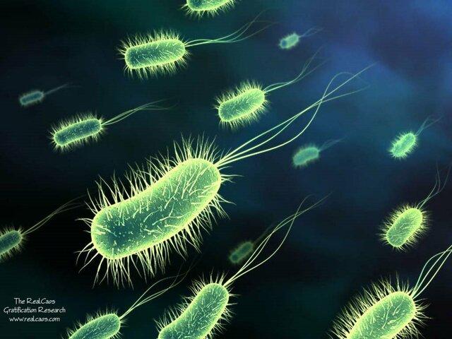 3.500 Millones de Años - Evolución celular
