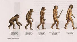 L'evolució dels homínids timeline