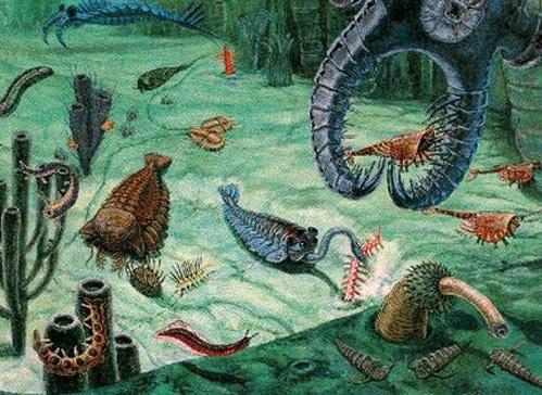 540 Millones de Años - Evolución de los Seres Vivos