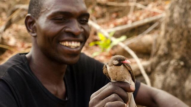Salva and Bukusa discover honey with birds!