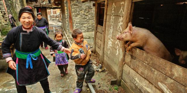 La domesticación tuvo origen en China