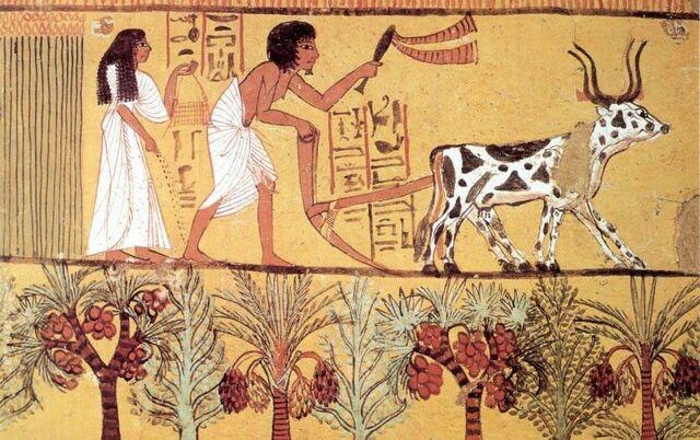 """Desarrollo tecnológico general """"La ganadería"""" en la Prehistoria-Neolítico (10 000 - 3500 a.C.)"""