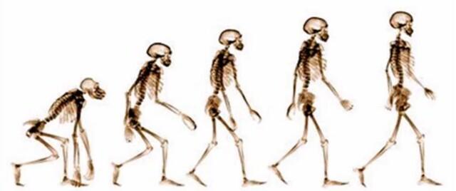 TEORÍA DE LA EVOLUVIÓN