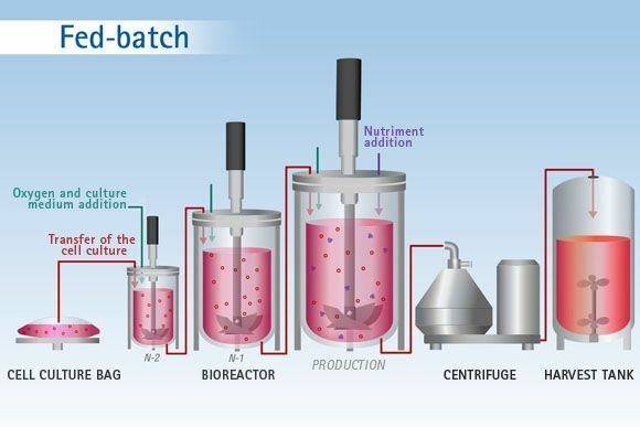 Biorreactores Fed-Bacht