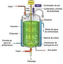 Bioreactor con agitadores