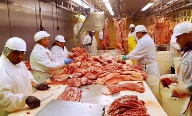 Producción de carne y grasa