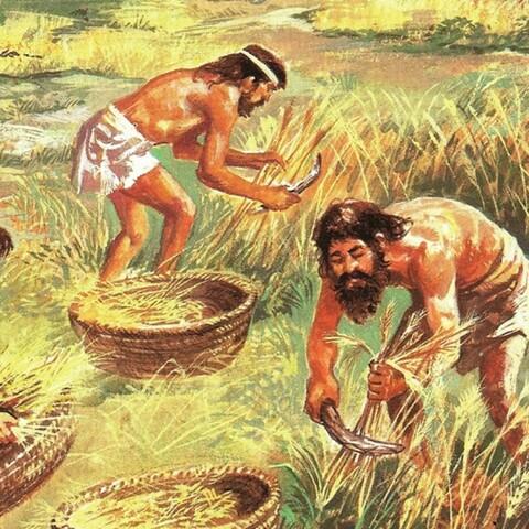 Descobriment de l'agricultura i ramaderia