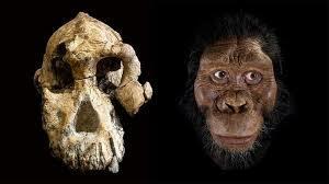 Fet históric: Troben l'edat d'un homínid proper a la Lucy