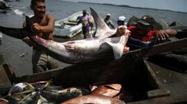 Pesca de Tiburon En el Pacifico de Guatemala timeline