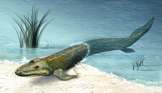 355 millions of years ago