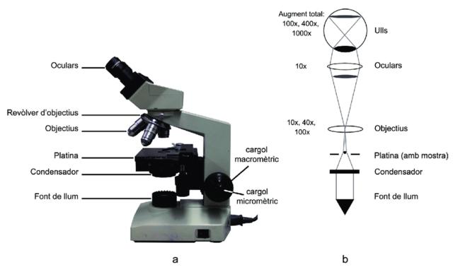 Microscopi compost