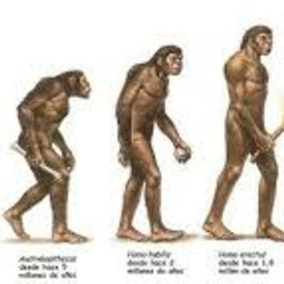 la evolución del ser humano timeline