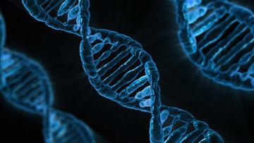 Projecte Genoma Humà ( 1990)