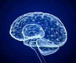 Ver dentro de un cerebro