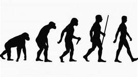 Origen y evolución de la vida timeline