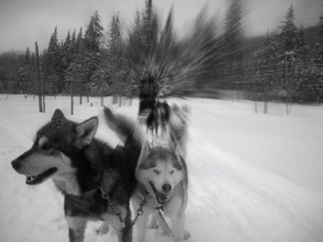 A diphtheria epidemic in Alaska occurs