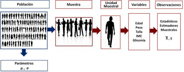 Aplicación de técnicas estadísticas al estudio de problemas biológicos