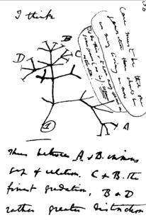 Inicios de la teoría de Darwin