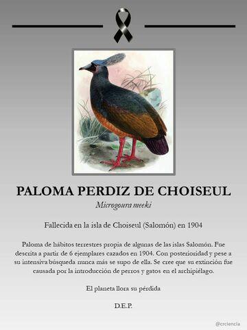 La Paloma Perdiz de Choiseul.