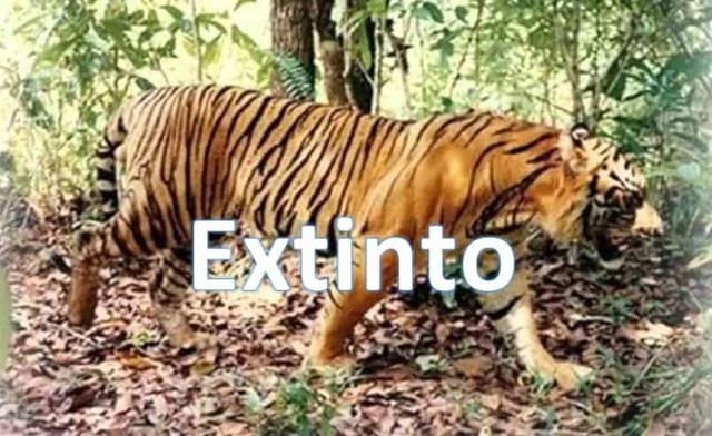 El Tigre de Bali.