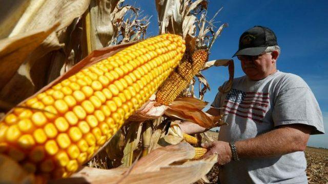 El gobierno subsidia a productores medianos de maíz.